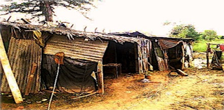 Lean-to huts