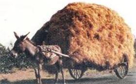 donkey_hay